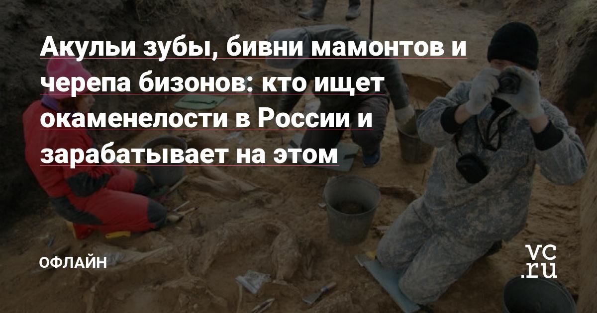 Акульи зубы, бивни мамонтов и черепа бизонов: кто ищет окаменелости в России и зарабатывает на этом