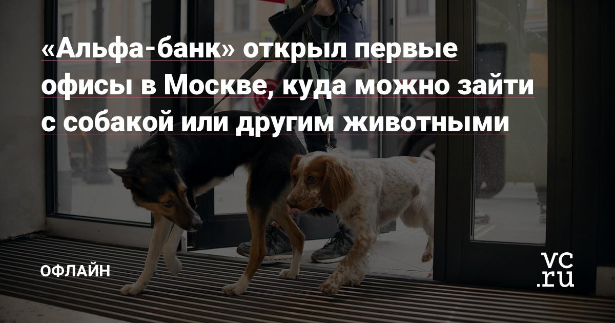 «Альфа-банк» открыл первые офисы в Москве, куда можно зайти с собакой или другим животными